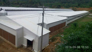 Light Steel Structure Chicken Shed Project in Philippines.jpg